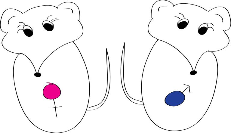 mousemicrobiome